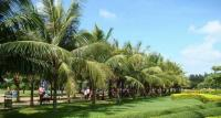 海南椰岛重回酒业的危与机
